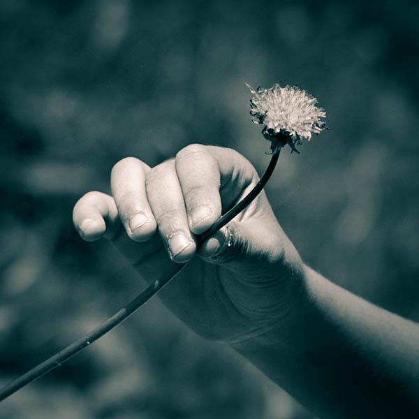 Darco TT - Retazos - cindo decos y una flor