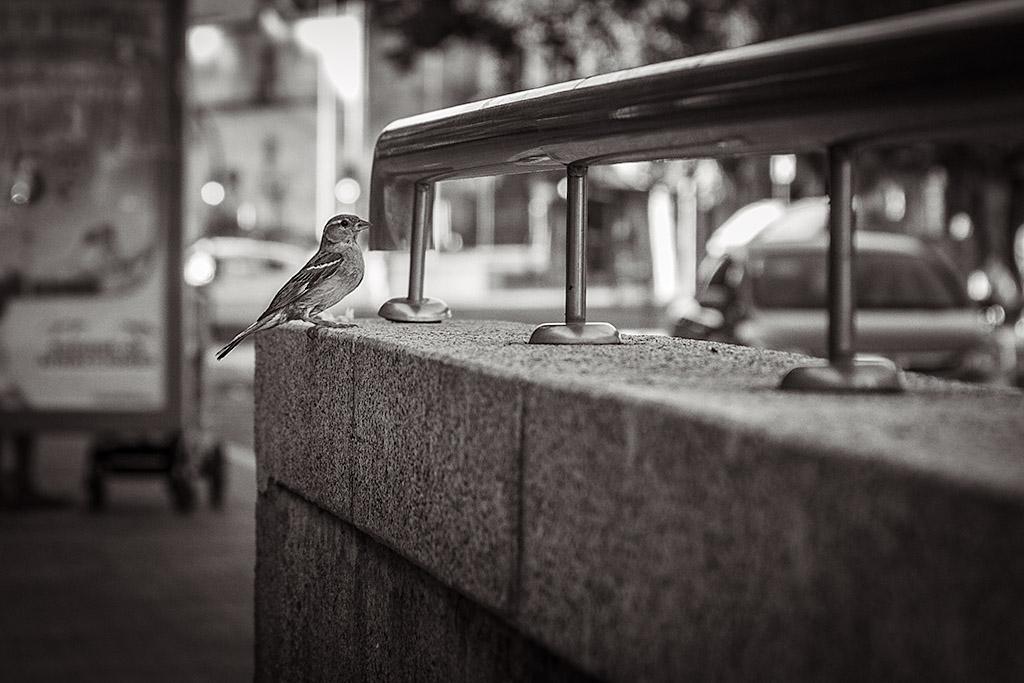 Fauna Urbana I